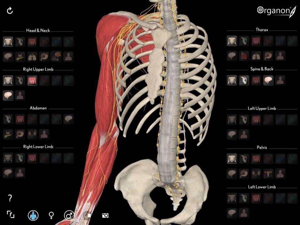 3D Organon VR